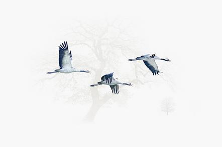 Heiko Römisch 8- three cranes flying
